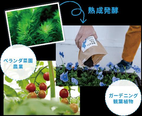 有機分の豊富な「水草」を、微生物発酵して「有機肥料」を作ること
