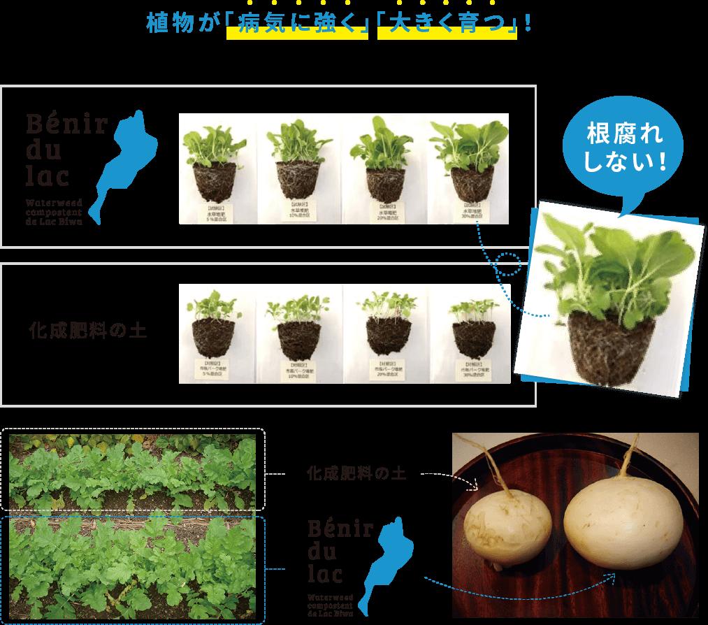 植物が「病気に強く」「大きく育つ」!